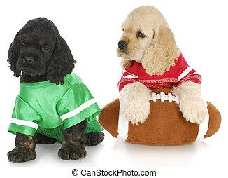 litter mates - two cocker spaniel puppies wearing football...