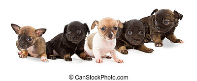 Litter of mixed breed puppies