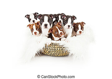 Litter Of Puppies In A Basket