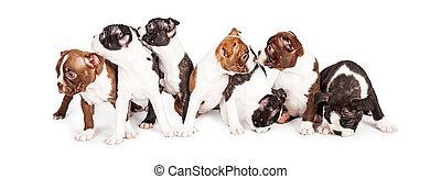 Litter of Puppies Looking Around