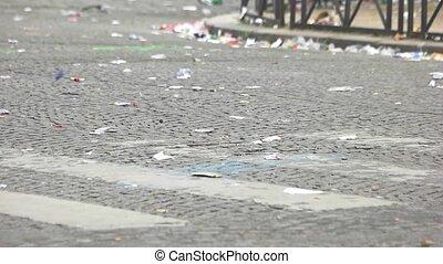 Litter on road. Empty pedestrian crossing. Ecological...