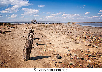 littered the drying lake shore