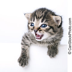 little 2 weeks old kitten - Studio portrait of a cute littel...