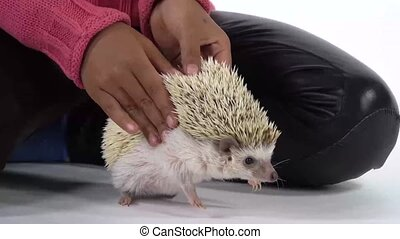 Little african girl with hedgehog at white background. Kid in pink sweater. Curious hedgehog is sniffing at studio. Close up. Slow motion