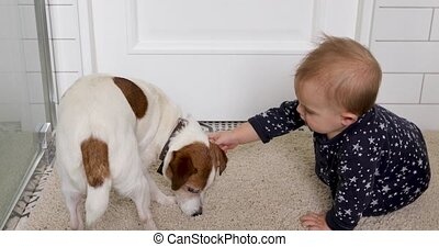 Little baby and dog Jack Russell Terrier on a white carpet...