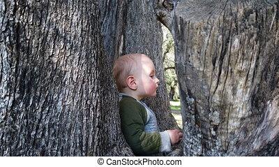 Little Baby Boy Climbing A Tree