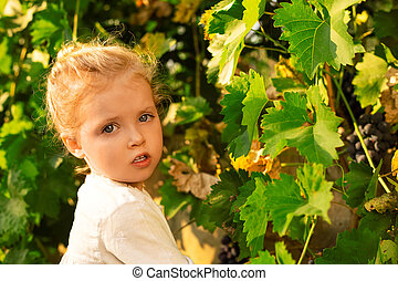Little baby girl picks grapes harvest in the summer time at sunset. Portrait of a beautiful white child girl 3 years old curly blonde picks grapes on a farm in the vineyard. Grapes harvest.