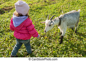 Little baby girl playing with the young goat at village