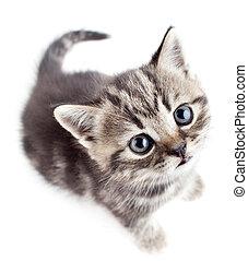 little baby kitten looking upwards top view