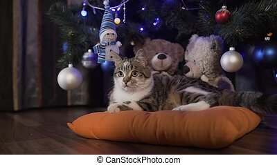 Little beautiful cat plays at the Christmas tree, Christmas holidays, evening