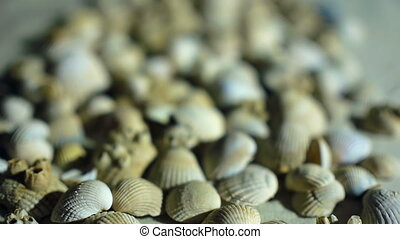 Little, beautiful sea shells with sand and back light, rotation, on black background
