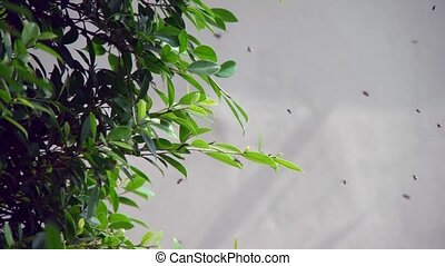 little bee flying over green branches of trees