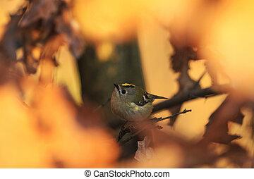little bird among the golden leaves of autumn
