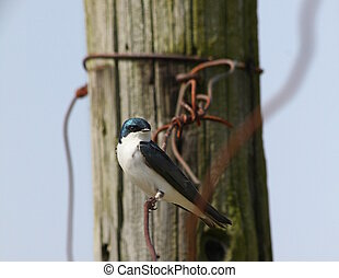 Little bird and tangled wire