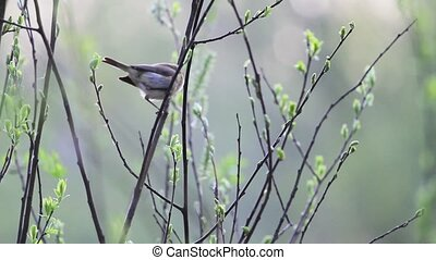 little bird is jumping in thin branches, change of season,...