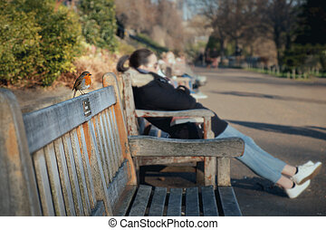 Little bird is sitting on the wooden bench in the park