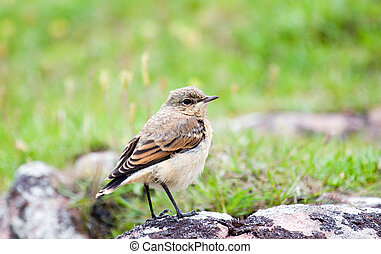 Little Bird looking around
