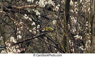 Little Bird on Blossom Tree