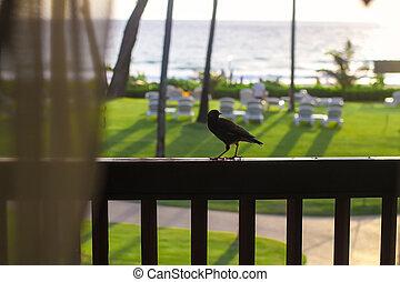 Little bird on the balcony