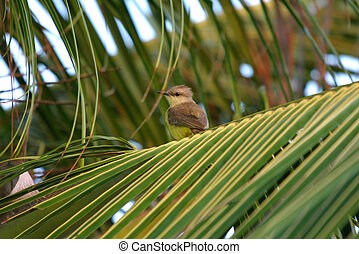little bird on top of a palm tree
