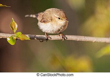little bird sits on a thin branch