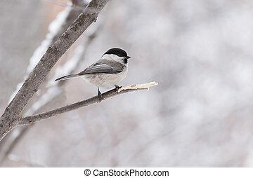 little bird sitting on a branch