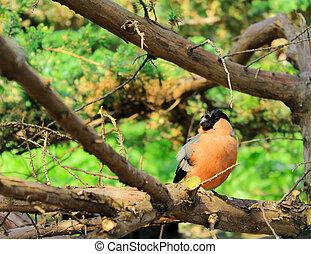 Little bird sitting on tree