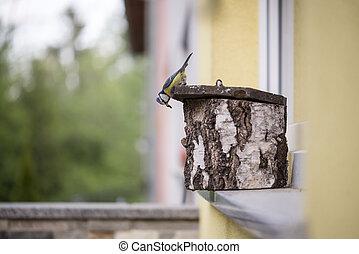 Little bird standing on a wooden nesting box