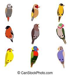 Little Birds Set, Amadin, Bullfinch, Canary, Parrot, Nightingale, Goldfinch, Budgerigar, Cute Home Pets Vector Illustration