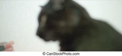 Little black cat.
