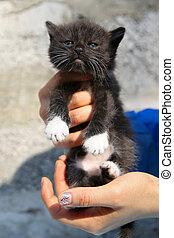 Little black homeless kitten in the hands