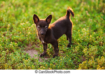 Little black puppy stands on green meadow