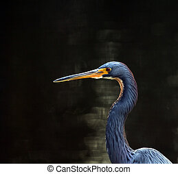 Little blue heron on the dock of the canal