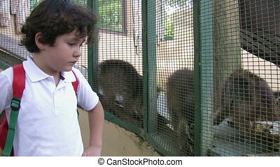 Little boy at the zoo with racoon