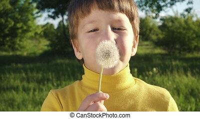 Little boy blowing up the dandelion in the park - Little boy...