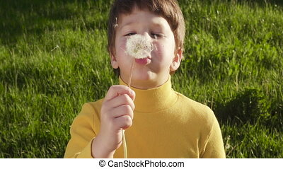 Little boy blowing up the dandelion in the park