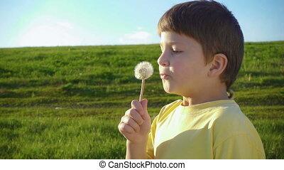 Little boy blowing up the dandelion seeds on green meadow