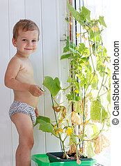 Little boy collect a cucumber from a bush in summer day