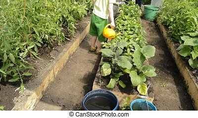 Little boy enthusiastically watering vegetable plants in the...
