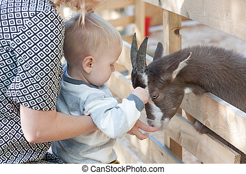 Little boy feeding a goat from the hand