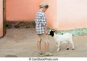 Little boy feeds a goat at  zoo