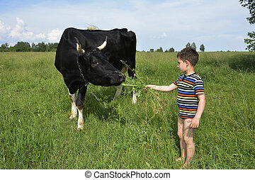 Little boy feeds the cow grass. - Small rural dirty barefoot...
