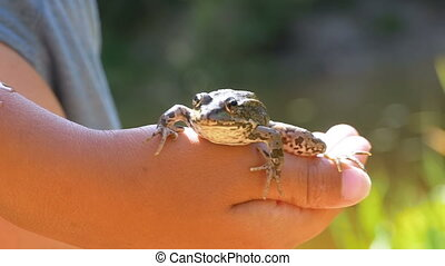 Little Boy Holding a Frog in his Hands on the Beach near the...