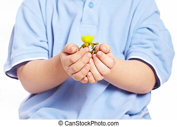 Little boy holding plant in hands