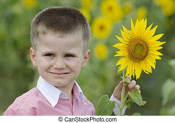 Little boy in a sunflower field