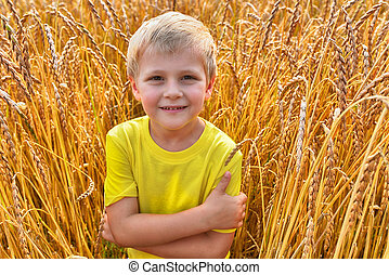 little boy in field - little boy among wheat ears