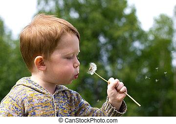Little boy in the field of dandelions