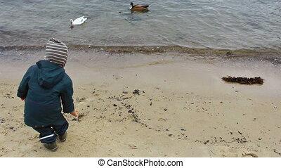Little boy on the beach with ducks
