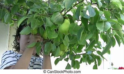 Little Boy picking pear