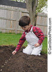 Little boy planting a row of seeds in spring - A little boy ...